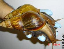 story.snail.giant.ap