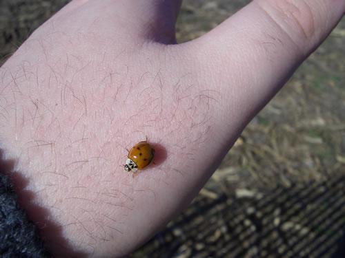 Ahh, the lady bugs like me